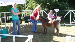 The Miniature Horse was a big hit with the kids!